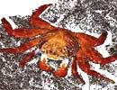 [Image: crab.jpg]